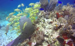 Manchones Reef Scuba Diving
