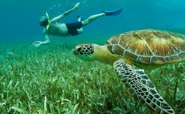 Snorkeling-with-Turtle_interior_masthead