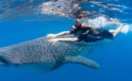 Swimming-with-whale-shark-Isla-Contoy-690×355