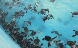 Turtles tortugas