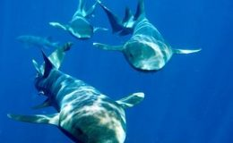 121108_Belize_Ambergris_Caye_sharks_shutterstock_000100019954