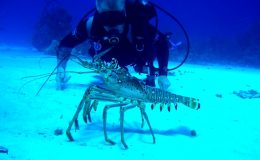 Best-Scuba-Diving-in-the-Caribbean-Dive-in-Little-Cayman