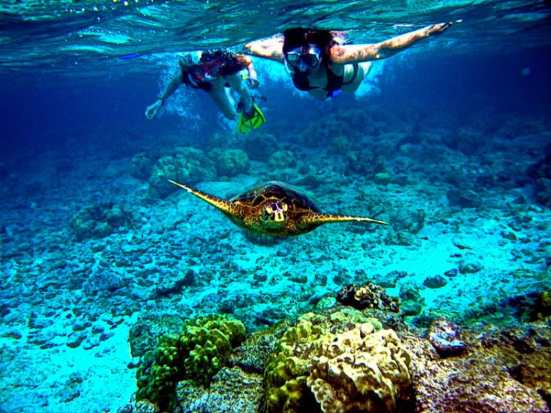 Cozumel Snorkeling Tours From Playa Del Carmen