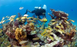 Manchones Reef Scuba Diving 2