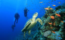 Scuba-Dive-Cozumel-Reefs