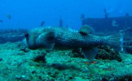 Wreck Dive El Frio Ultrafreeze Cancun 3