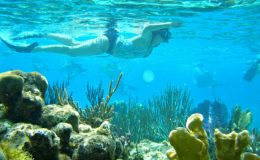 best-snorkeling-islands-grand-cayman_rend_tccom_616_462