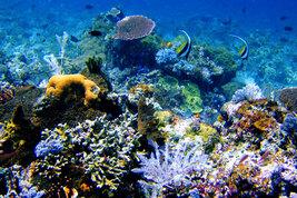 Media Luna Coral Reef