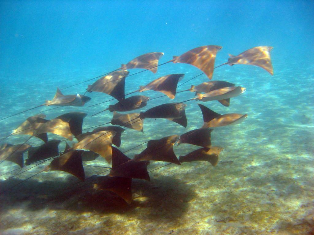 Hool Reef