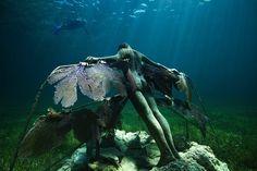 Punta Nizuc reef