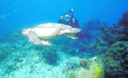 Montego Bay Scuba Diving