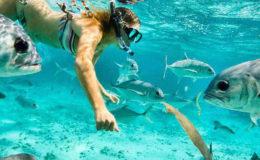 intro-snorkel