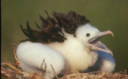isla-contoy-bird1