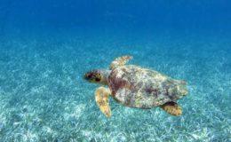 plid_8013_Snorkeling_plid_8013_ii_holbox-47262_article_full_2
