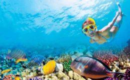 reef-experience-snorkel-arrecife-puerto-morelos-e1455289841141