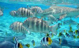 snorkel_in_puerto_morelos1