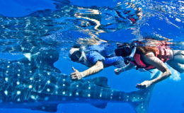 whale-shark-tour-mexico-8